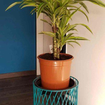 Porte plante en fil métallique bleu